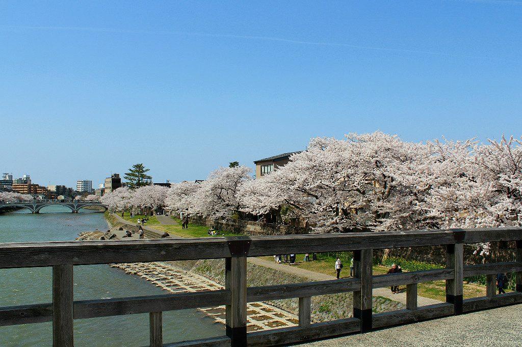 In Higashi Chaya, Kanazawa, sakura cherry blossom trees line the Asano River