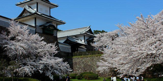 Hanami under the sakura cherry trees in front of Kanazawa's Japanese castle
