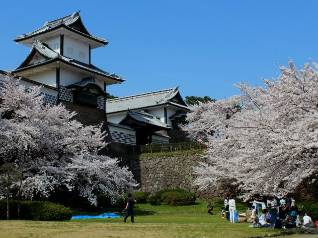 Hanami under the sakura cherry trees in front of Kanazawa's Japanese castle