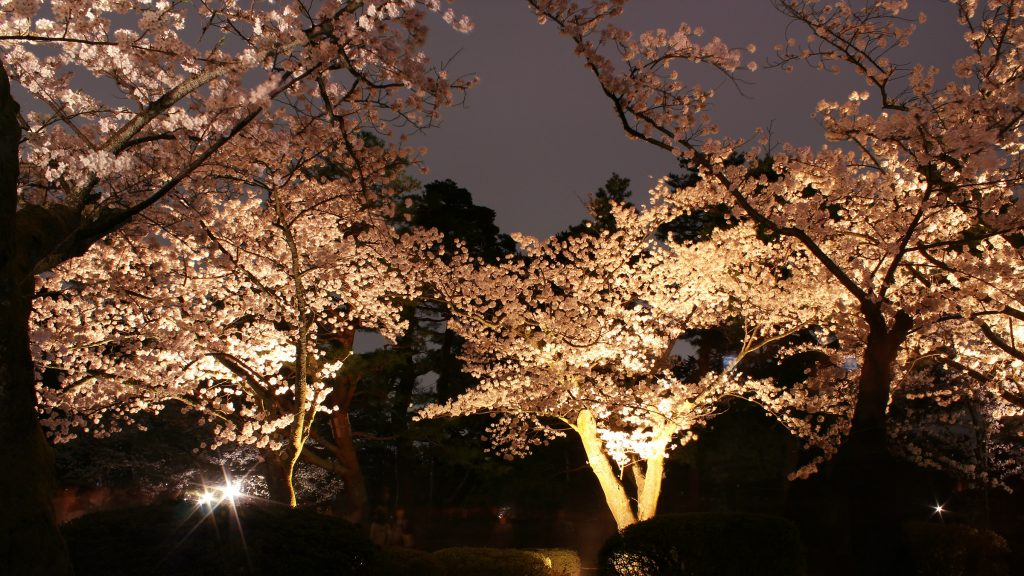 Kenrokuen Garden Springtime Sakura Light Up Event