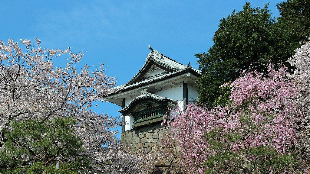 Kanazawa Castle Park during Cherry Blossom Season