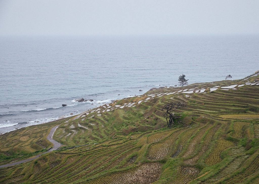 The 1004 Rice Paddies of Senmaida