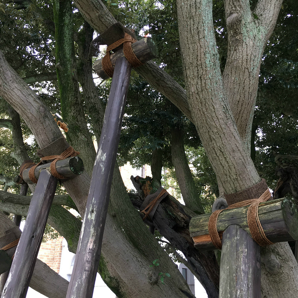 Tree Supports in Kanazawa Japan, Aaron Maninno