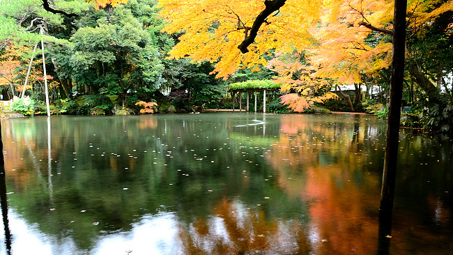 Shofukaku Garden in autumn, near Hokutoh Pottery and the DT Suzuki Museum in Kanazawa, Japan