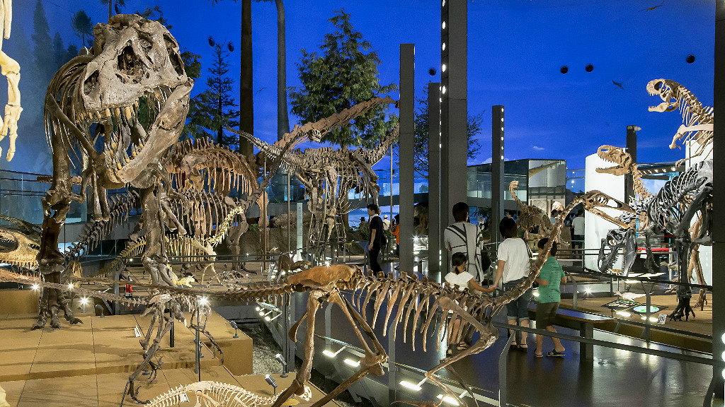 The Dinosaur World level of the Fukui Dinosaur museum includes 35 full skeletons
