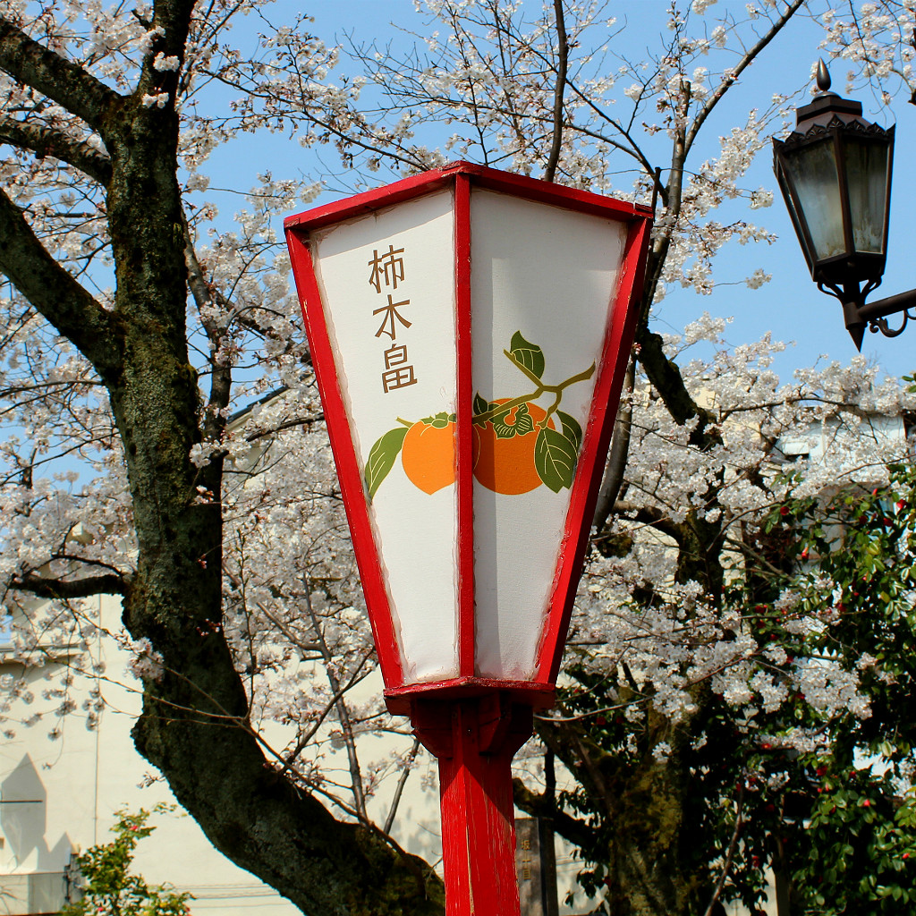 Persimmon paper lantern in Kakinokibatake during sakura season in Kanazawa, Japan