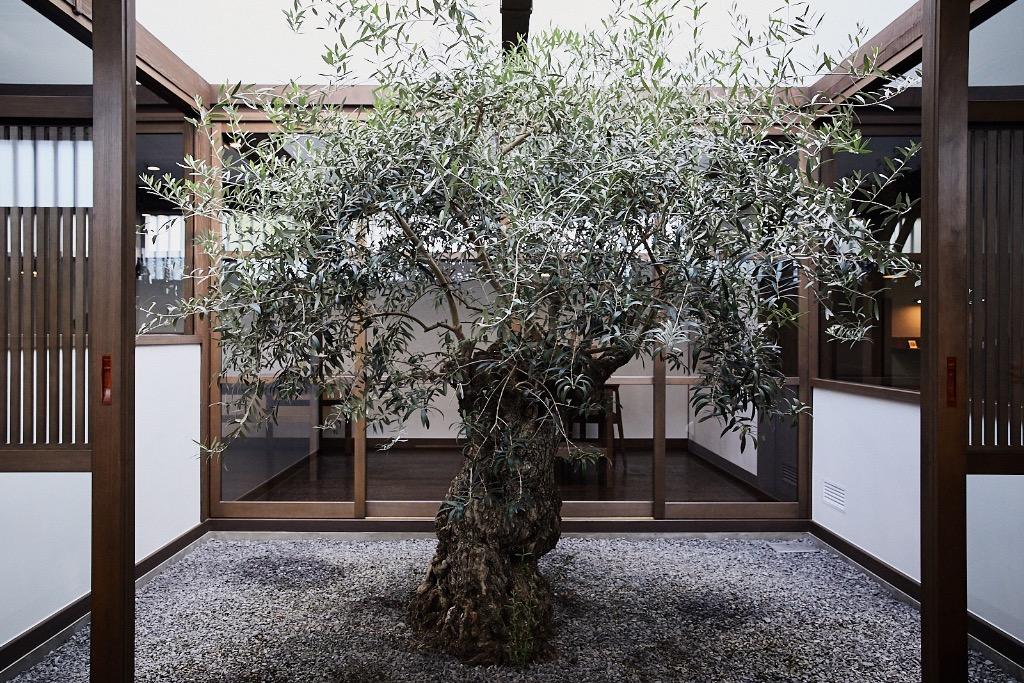 Interior garden space at YArn, in Komatsu