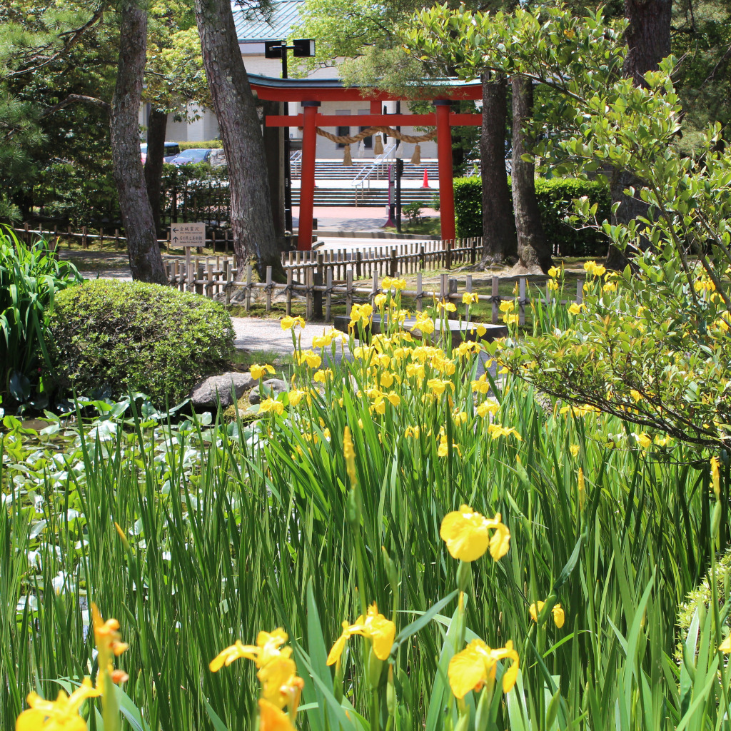Kanazawa Shrine's red torii gate guides visitors to the iris and lily pond.