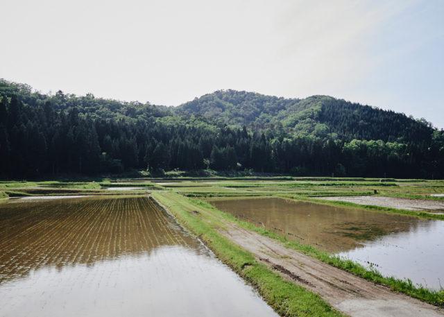 Sake Noguchi, Komatsu